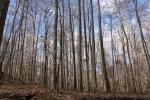 Hardwoods along western property line