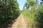 Established trail system alongside pine plantation