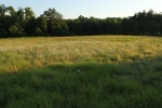 Secluded pasture and homes site well off main road