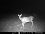 Very mature 8pt during pre-rut stage