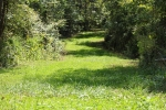 Old logging road converted to clover strip