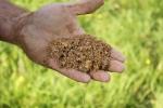 Excellent soils- potential for numerous lots