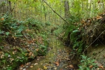 Tranquil perennial stream runs beneath home site