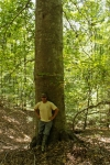 Huge beech trees populate the property