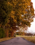 Mature oaks overhang paved entrance to farm