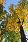 Abundance of mature Hickory, Oak and Poplar