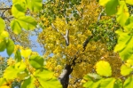 Beautiful fall foliage surrounding homesite along ridgetop