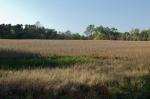 Soybean field on neighboring farm