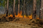 Prescribed fire results in the regeneration of highly palatable and nutritious forbs that wildlife crave!