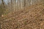 Fresh turkey scratchings on a hardwood hillside