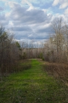View down a food plot strip from a ground blind