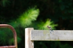 Abundance of songbirds