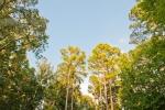 Towering loblollies and hardwoods surround the bottom pasture