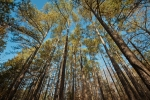 Towering loblolly pines serve as a nice buffer between Antioch Road and the rest of the farm