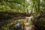 Scenic Coy Creek meanders through the farm's NE corner