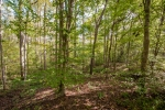 Mature hardwoods between Coy Creek and the 2 acre food plot area