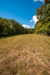 Narrow strip of pasture tucked away between mature hardwoods and the Northern property line.