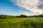 13 acres of rolling pastureland with wonderful views.  The entire pasture is fenced with high tensile wire.