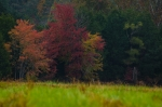 Hardwoods along the pond dam show off their Fall beauty