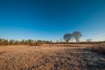 16 acre field of Amarillo King bermudagrass.  Brush piles left for additional wildlife habitat.