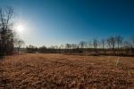 13 acre field of Big Bluestem- March 2013