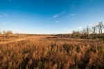 118 acres of open land with 9 fields