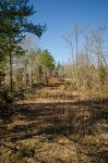 Access road and fire break along the Northern property line
