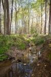 Stream just beneath the fescue pasture