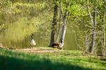 Morning Glory Farm is home to an abundance of wildlife