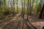 43+/- acres of woodsland
