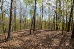 Woodsland is comprised of intermediate to mature hardwood and pine