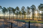 Welcome to Long Ridge Sanctuary- Pender County's finest rural real estate offering!