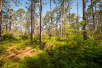 227+/- acres of mature pine timber