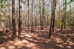 50+/- acres of natural pines need to be thinned