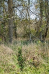 Heavily traveled deer trail leading to the Dan River