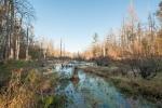 5+ acre duck swamp