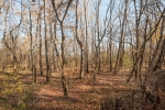 Section of bottomland hardwoods along the Dan River