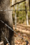 Barbed wire fencing along the Eastern property line