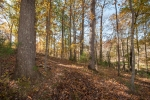 Roughly 200 wooded acres