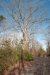 Large oaks scattered throughout the property
