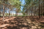 26.5 acres of planted pines