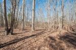 30+/- acres of mature hardwoods