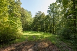 Small food plot clearing ideal for bowhunting