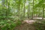 Bottomland hardwoods