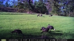 Caswell County is home to some of the best turkey hunting in the State