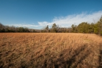 17+/- acres of open land