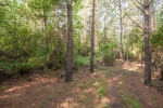 36 acres of managed loblolly pine planted in 2004