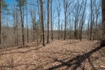 Mature hardwoods on the NW end of the property