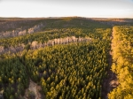 116+/- acres of planted lobolly pines