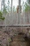 Several streams